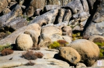 Rocks at Alabama Hills, Eastern Sierras