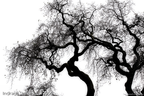 """Network of Veins"""