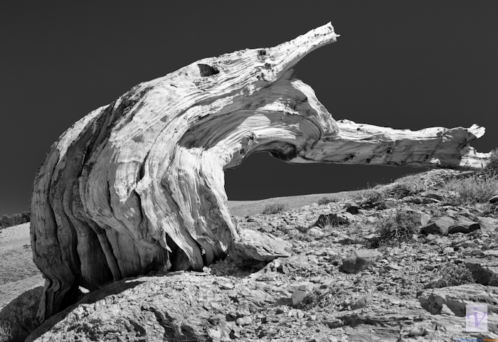"""Dead tree stock & rocks"""