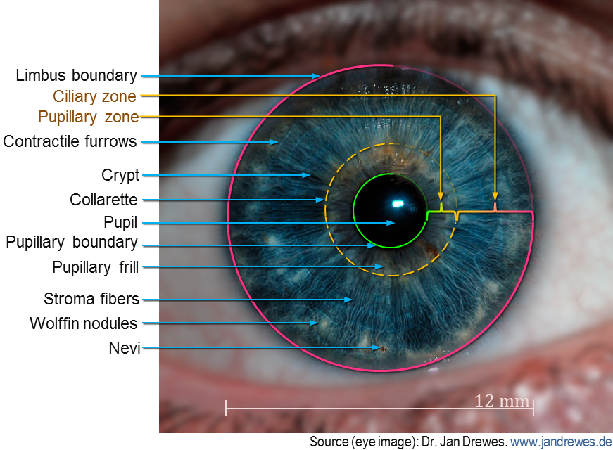 thesis eye recognition Iris recognition: an emerging biometric technology face recognition is a topic of active research  as applied to the colored portion of the exterior eye.