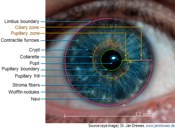 Primer on iris recognition